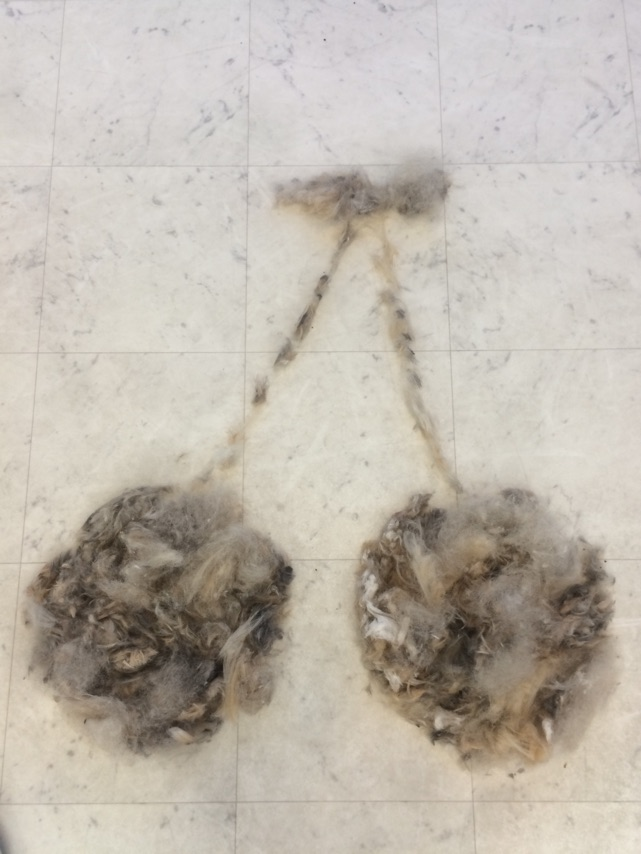 attachment00.jpg